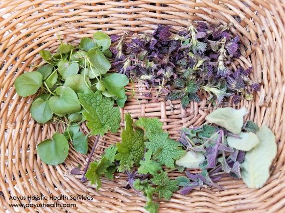 watercress nettles motherwort catmint-w